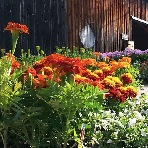 Flower & Plant Market