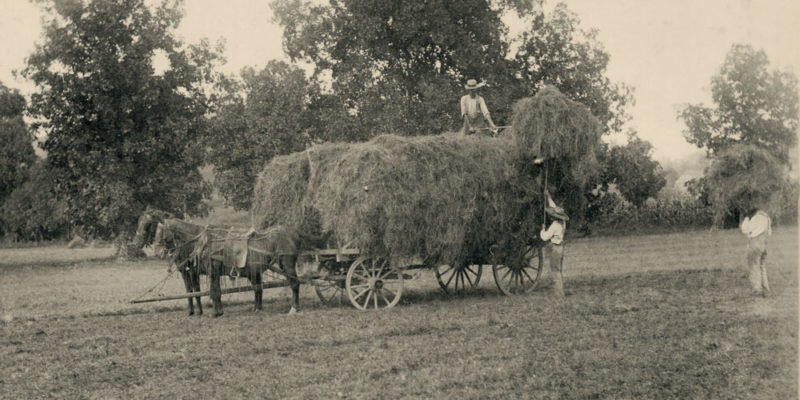 Old rural life hay