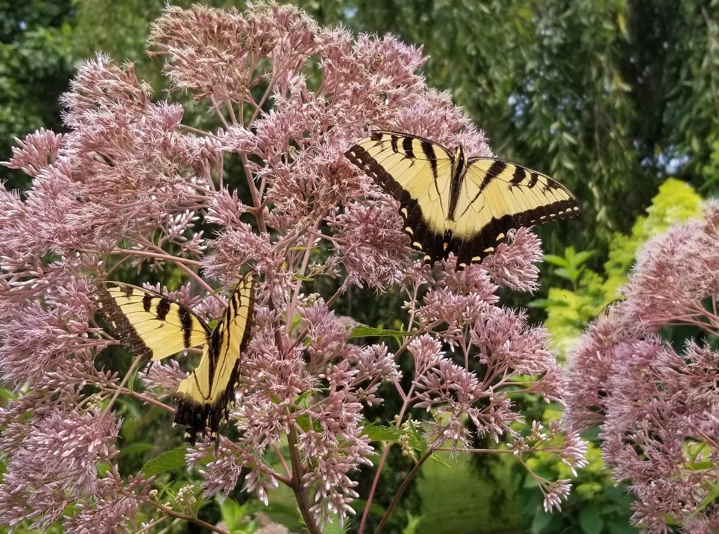 Butterflies in the Gardens
